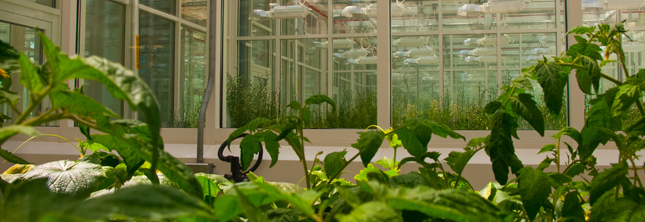 KAUST research greenhouse